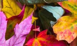 Top 10 Autumn Perfumes